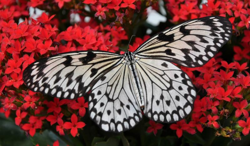 Sindrome dei bambini farfalla