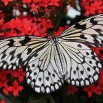 Sindrome dei bambini farfalla: che cos'è l'Epidermolisi Bollosa