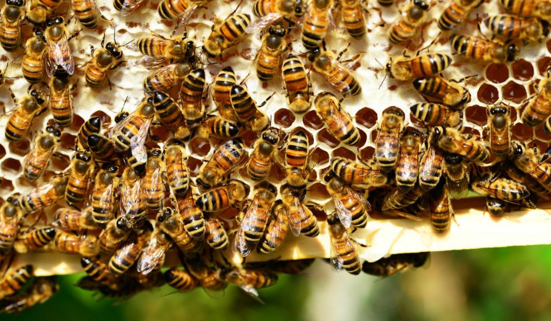Dermatite atopica: e se a curarla fossero le api?